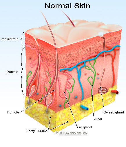 There's a Scientific Name for that! (Dermatological Skin Terms to ...